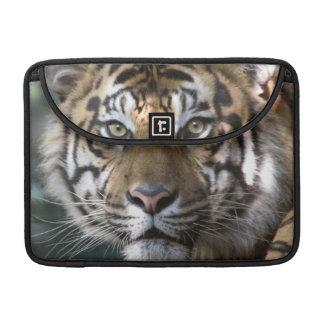 Male Sumatran Tiger (Panthera tigris sumatrae) Sleeve For MacBooks
