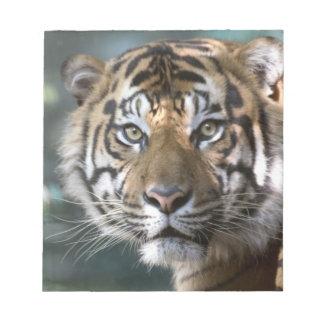 Male Sumatran Tiger (Panthera tigris sumatrae) Notepad