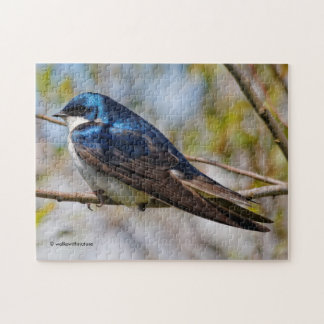 Male Tree Swallow on a Tree Jigsaw Puzzle