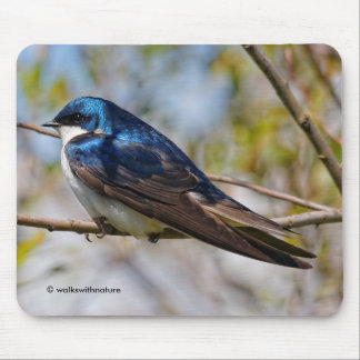 Male Tree Swallow on a Tree Mouse Pad