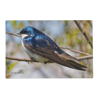 Male Tree Swallow on a Tree Placemat