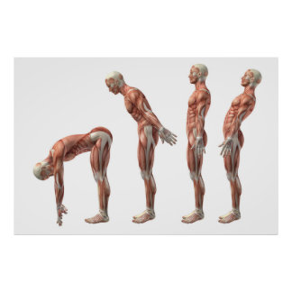 Male trunk flexion, extension & hyperextension poster