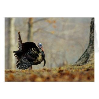 Male turkey strutting, Illinois Card