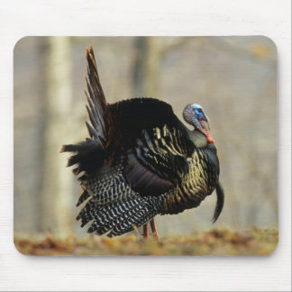 Male turkey strutting, Illinois Mouse Pad