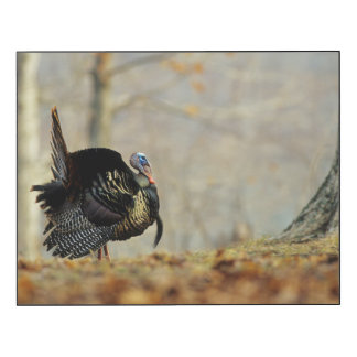 Male turkey strutting, Illinois Wood Wall Art