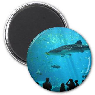 Male Whale Shark at Georgia Aquarium 2 Inch Round Magnet