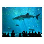 Male Whale Shark at Georgia Aquarium Postcard