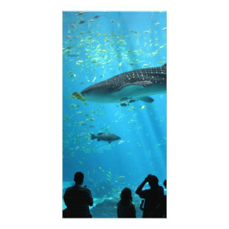Male Whale Shark Card