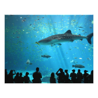 Male Whale Shark Full Color Flyer