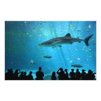 Male Whale Shark Flyers