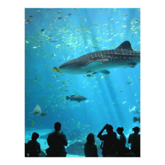 Male Whale Shark Flyer Design