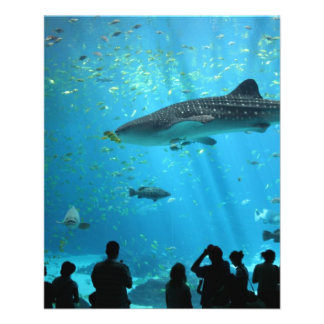 Male Whale Shark Custom Flyer
