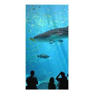 Male Whale Shark Photo Card Template