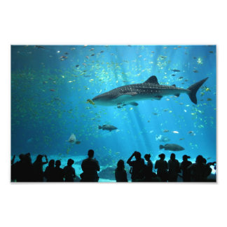 Male Whale Shark Photographic Print