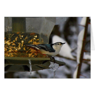 Male White-Breasted Nuthatch Card