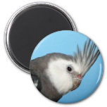 Male Whiteface Cockatiel Refrigerator Magnets