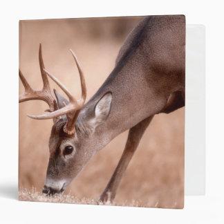 Male whitetail deer grazing 3 ring binder