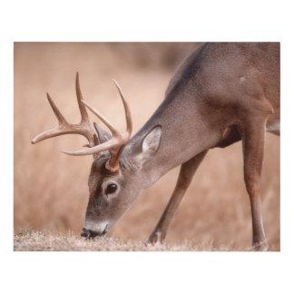 Male whitetail deer grazing panel wall art