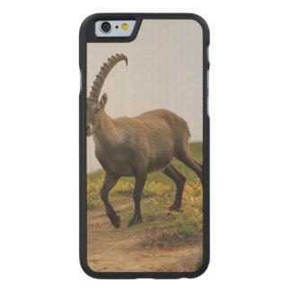Male wild alpine, capra ibex, or steinbock carved maple iPhone 6 slim case