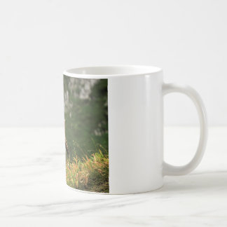 Male wild alpine, capra ibex, or steinbock coffee mug