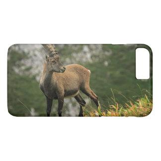 Male wild alpine, capra ibex, or steinbock iPhone 8 plus/7 plus case