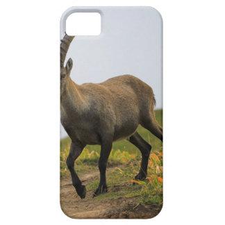 Male wild alpine, capra ibex, or steinbock iPhone SE/5/5s case