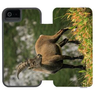 Male wild alpine, capra ibex, or steinbock wallet case for iPhone SE/5/5s