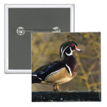 Male wood duck, Canada Pins