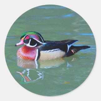 Male Wood Duck on pond Classic Round Sticker