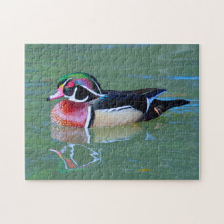 Male Wood Duck on pond Jigsaw Puzzle