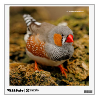 Male Zebra Finch on the Rocks Wall Sticker