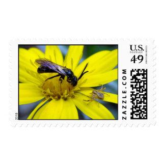 Malhumorado y la abeja franqueo