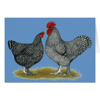 Maline Chickens Card