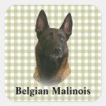 malinois belgas calcomanías cuadradass personalizadas