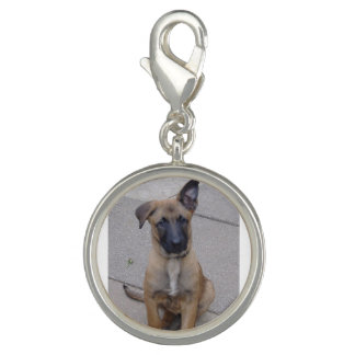 malinois puppy sitting.png photo charms