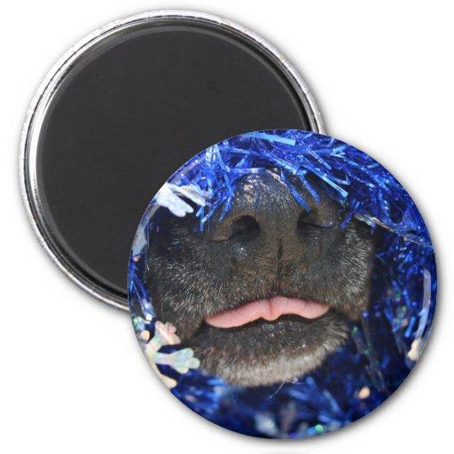 Malla del azul de la lengua de la nariz de perro p iman para frigorífico