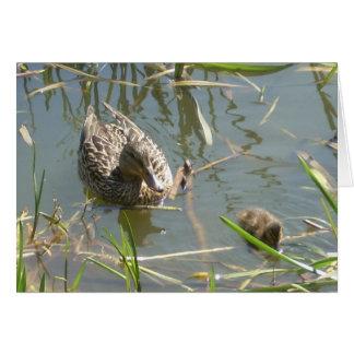 Mallard and Duckling Card