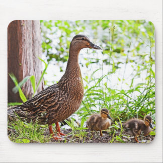 Mallard and Ducklings by Shirley Taylor Mouse Pad