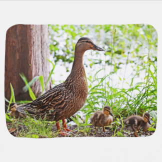 Mallard and Ducklings by Shirley Taylor Receiving Blanket