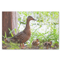 Mallard and Ducklings by Shirley Taylor Tissue Paper