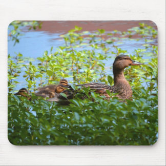 Mallard and Ducklings Mouse Pad
