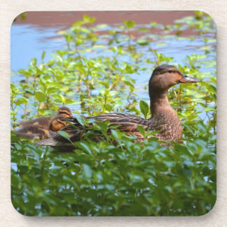 Mallard and Ducklings-Swimming by Shirley Taylor Beverage Coaster
