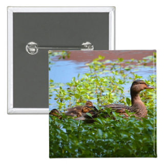 Mallard and Ducklings-Swimming by Shirley Taylor Pinback Button