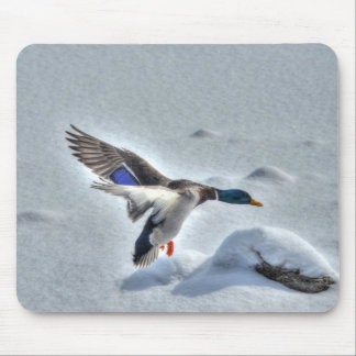 Mallard Drake Birdlover Wildlife Photo Mouse Pad