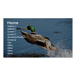 Mallard drake business card templates