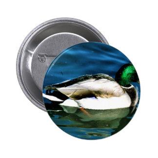 Mallard -drake button