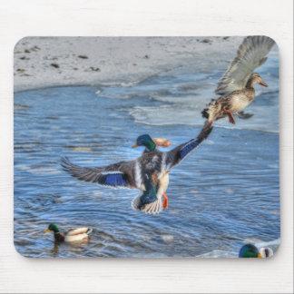Mallard Drake & Duck Birdlover Wildlife Photo Mouse Pad