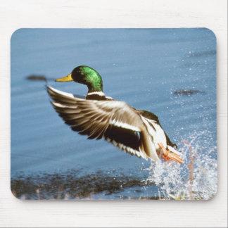 Mallard Drake Duck Mouse Pad