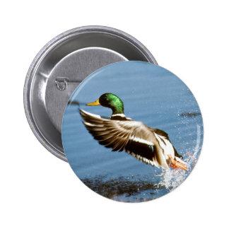 Mallard Drake Duck Pinback Buttons