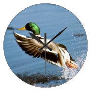 Mallard Drake Duck Wall Clock